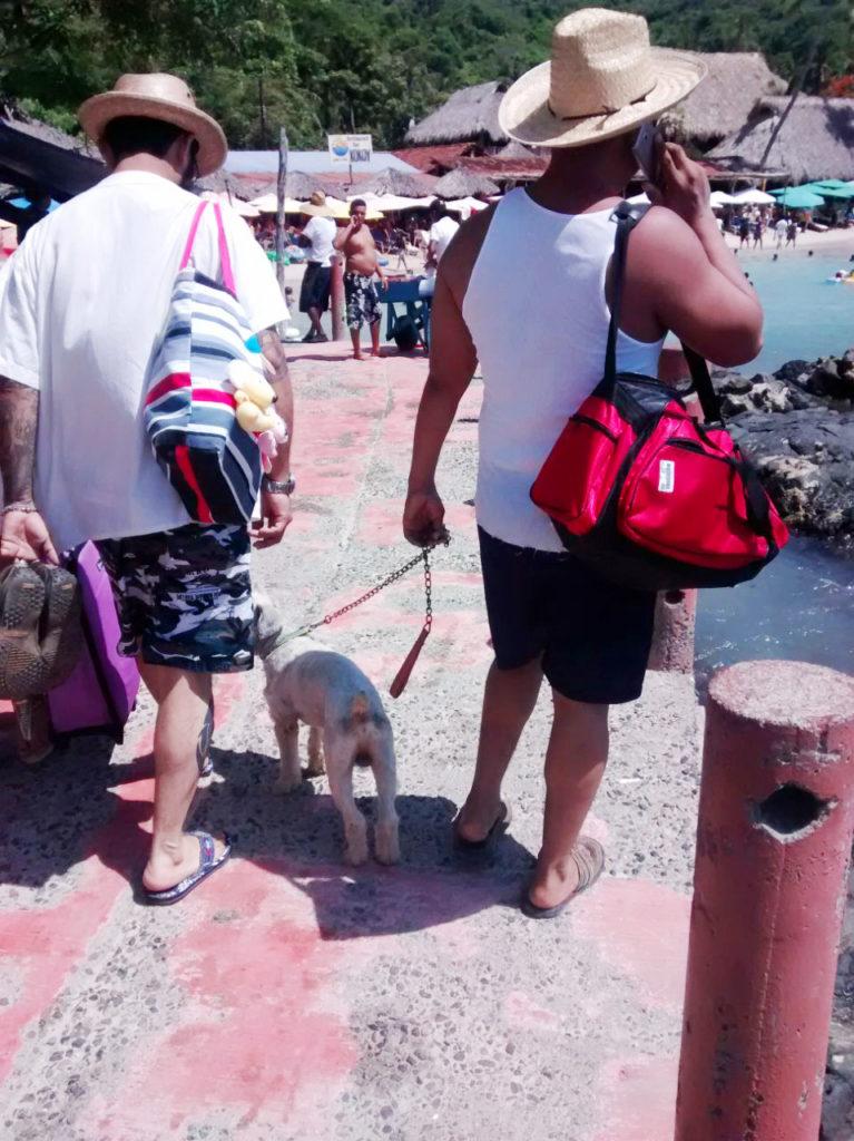 Municipio busca eliminar riesgos por acceso de mascotas a playas