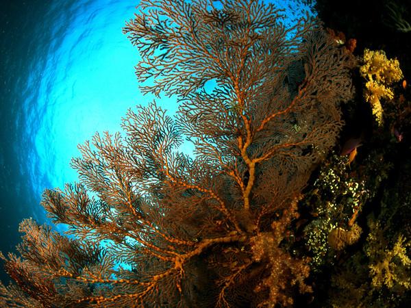 Buscan recuperar el 35% del coral dañado a través de arrecifes artificiales en la Costa Grande