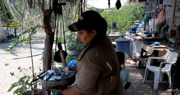 Pide apoyo para 200 familias pescadoras de la colonia 20 de Noviembre, en Tecpan
