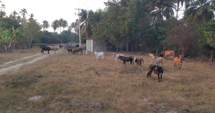 Claman apoyos ganaderos del municipio de Tecpan de Galeana