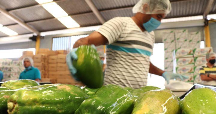Afectada la comercialización de papaya en Tecpan por pandemia del Coronavirus