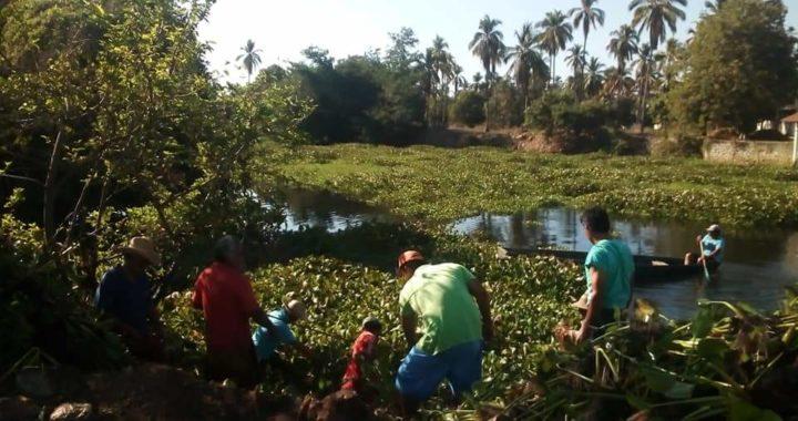 Con apoyo de la sociedad civil limpian de lirio acuático laguna de Coyuca de Benítez