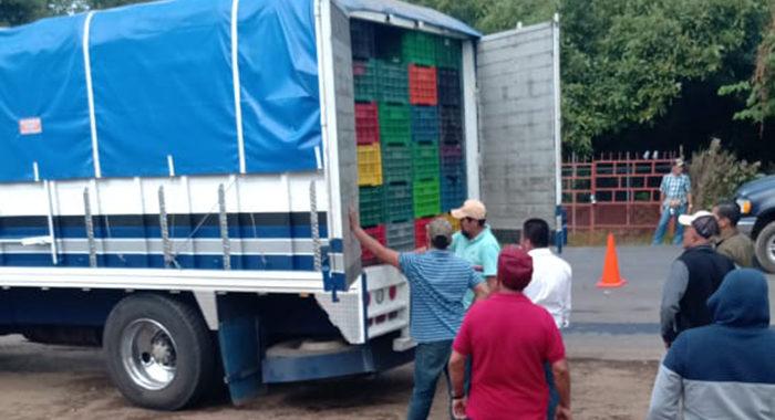 """Aguacate """"pirata"""" pone en riesgo exportación: hacen pasar por michoacano fruto de otros estados"""