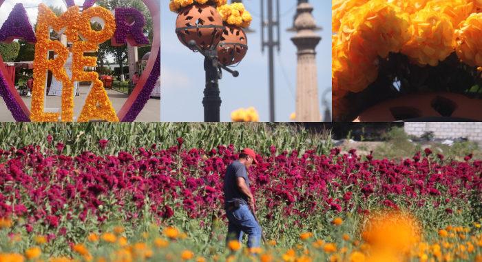 Agricultores desesperados por falta de venta y el ayuntamiento adornando el centro con flor de plástico