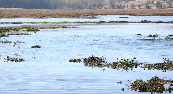 Ante falta de agua proyectan construir 8 nuevas presas en Michoacán, pero aún faltan los recursos